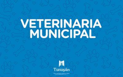 Plan Municipal de Castración: sistema de turnos en enero