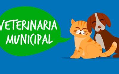 Importante campaña de la Veterinaria Municipal por el Mes del Animal